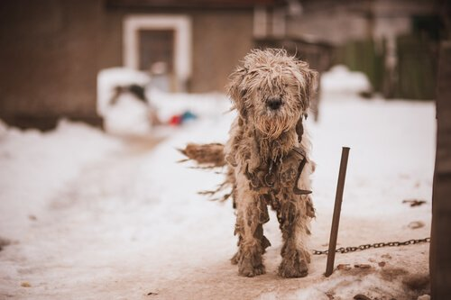 Sokakta, kürkü çok kötü hale gelmiş bir köpek.