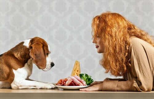 Köpeğin Temel Besin Maddelerine İhtiyacı