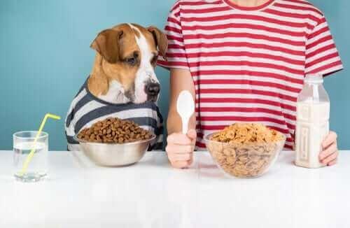 köpekler için temel besin maddeleri