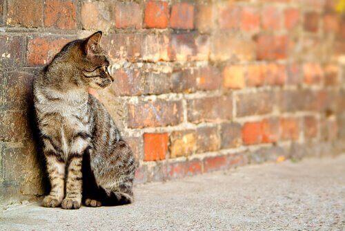Dışarıdaki bir duvarın önünde duran bir kedi.