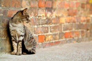 Terk edilmiş yalnız bir kedicik