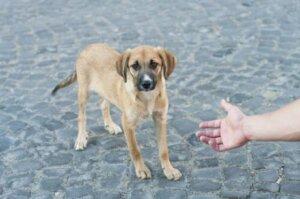 Yardım eli uzatılan bir terk edilmiş köpek.