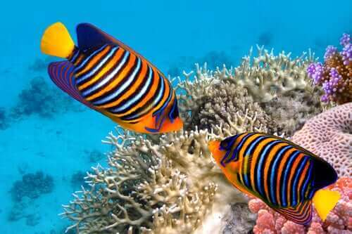 Tropikal Balıklar Hakkında 5 İlginç Gerçek