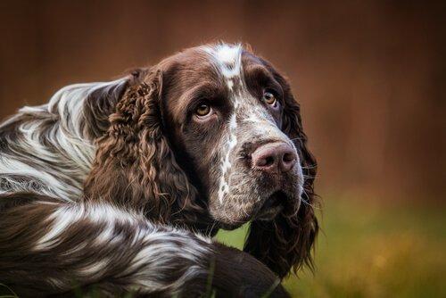 Köpeklerde Hıçkırık: Nasıl Durdurabilirsiniz?