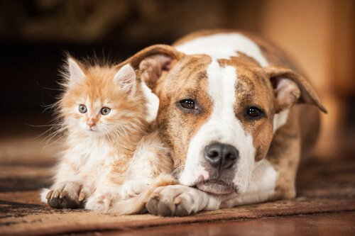 Yere yatan köpeğin bacağında oturan kedi