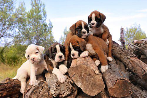 Birtakım odunların üstünde yatan köpek yavruları.
