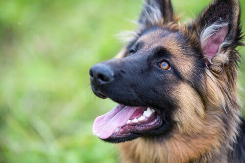 Köpeğinizin Özgüvenini Geliştirin