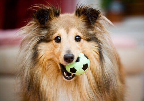 Köpeğiniz için Mükemmel Hediyeler