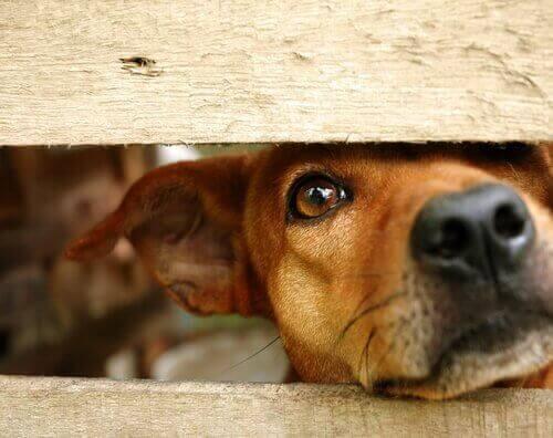 İstismar Edilmiş Bir Köpeğin Güvenini Kazanmak