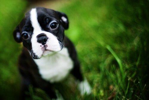 Bir Köpeğe Kendini Kontrol Etmeyi Nasıl Öğretirsiniz