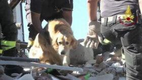 Depremden 9 Gün Sonra Kurtarılan Köpek