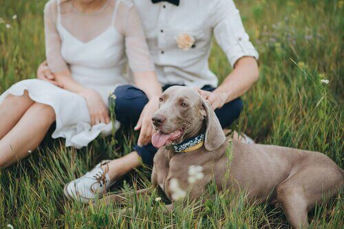 Köpeğinizi Düğününüze Götürmek İster Misiniz?