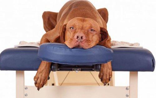 Evcil Hayvanlar İçin Kaplıcalar, Artık Onlar Da Rahatlayabilirler!