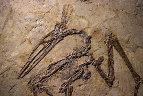 hamam böcekleri fosilleri