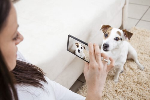 köpeğinin fotoğrafını çeken kadın