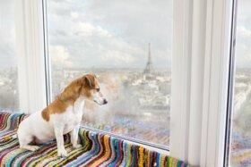 9 Evcil Hayvan Dostu Lokasyon (Ülkeler ve Şehirler)