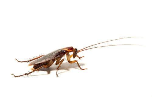 beyaz fon üstünde hamam böceği