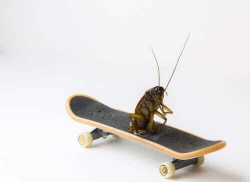 Hamam Böcekleri Neden En Eski Böceklerdir?