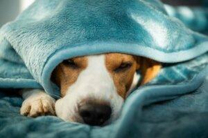 Köpeklerde Ruhsal Bozukluklar: Nasıl Tedavi Etmeli