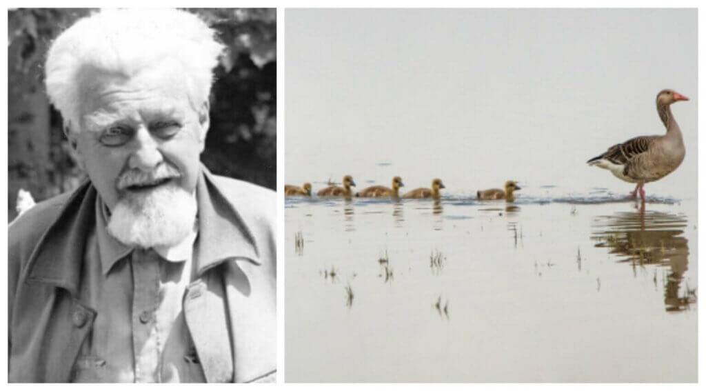 Konrad Lorenz ve Hayvan Davranışı Çalışmaları
