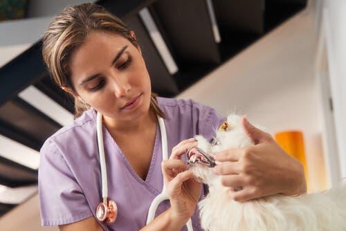 veteriner muayenesi
