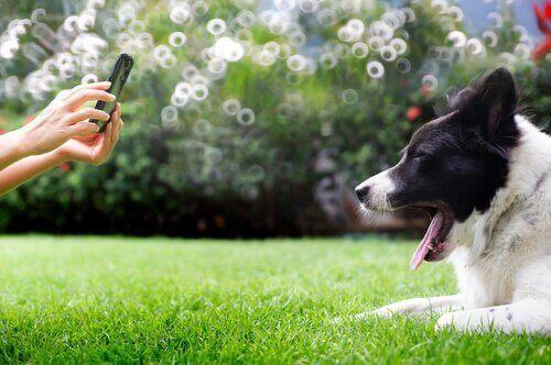 köpeğin fotoğrafını çeken kadın