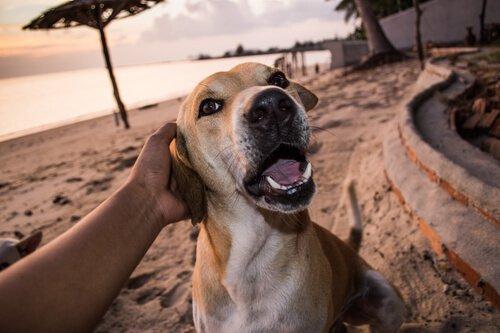 Köpek Sigortası Gerçekten Gerekli Midir?
