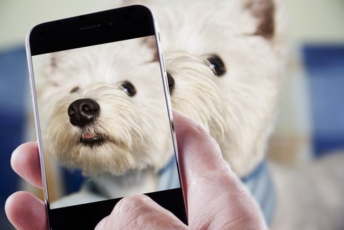 köpek fotoğrafı çekmek
