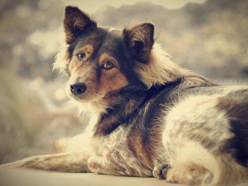Köpek Sahiplenerek Yalnızlığa Veda Edin