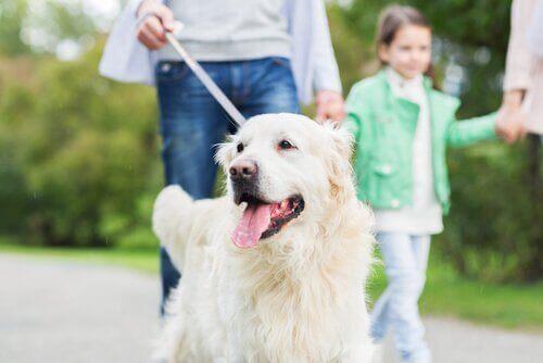 Sizin için Köpeğinizin Koşulsuz Yapacağı 10 Şey