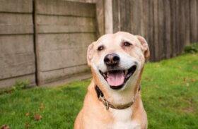 Köpekler Gülümser mi Yoksa Hepsi Bir İllüzyon mu?