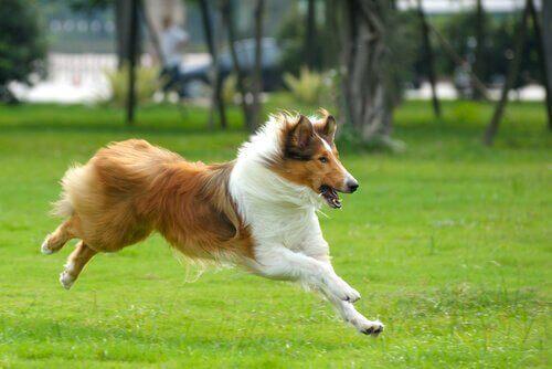 parkta koşan büyük köpek