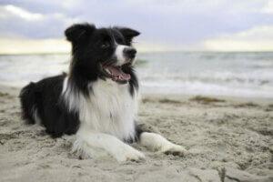 Kumsalda uzanmış köpek