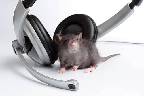 müziğin hayvanlar üzerindeki etkisi