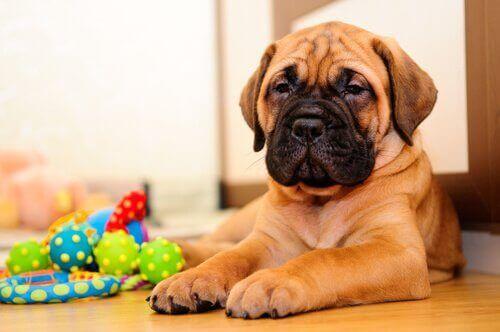 Artık Ofisteyken Evcil Hayvanınızla Oynayabilirsiniz