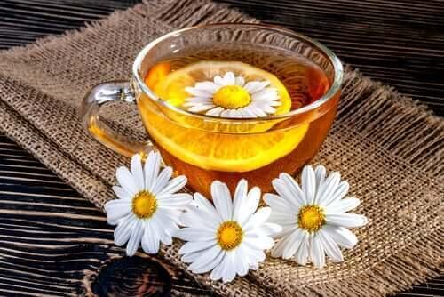 fincan papatya çayı