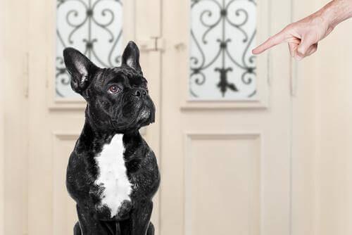 Köpeğinizi Eğitirken Yanlış Yaptıklarınız Neler?