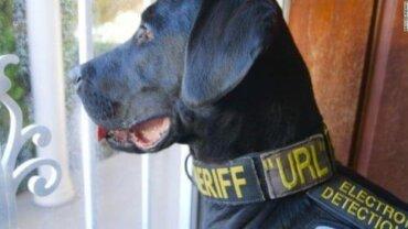 Porno Dosyalarını Bulan Polis Köpeği