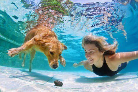 Rus İcadıyla Köpekler Su Altında Nefes Alabilecek