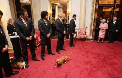 İngiltere kraliçesi ile birlikte salona giren köpek