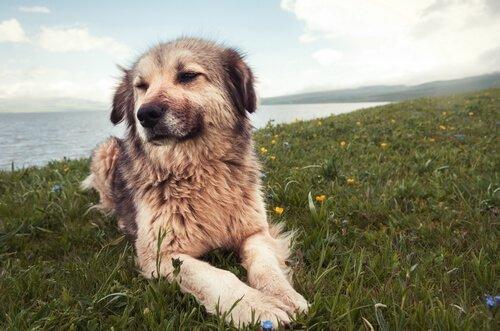 Köpeklerde Davranışsal Problemler: 7 Ana Neden