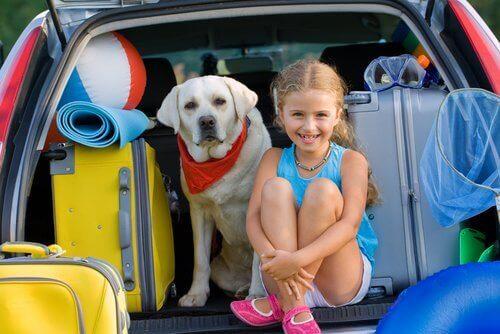 seyahat eden köpek
