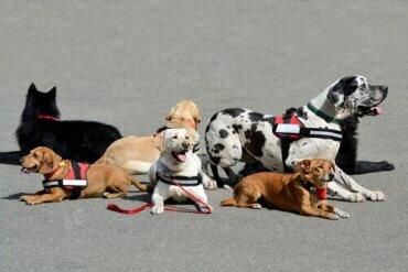 Beraber Büyümek, Çocuğunuz İçin Evcil Hayvan Terapisi