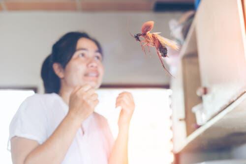 uçan hamam böceği