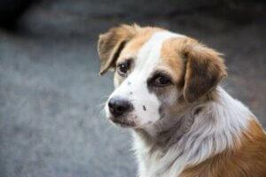 Üzgün bir köpek
