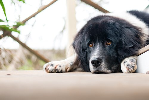 Köpeklerin Duygusal Problemleri Olur Mu?