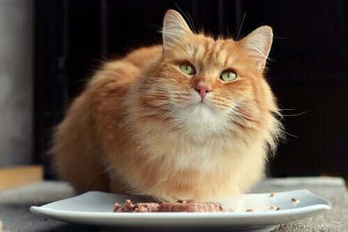 Kediler İçin Yaş Mama Formüllerinin Yararları