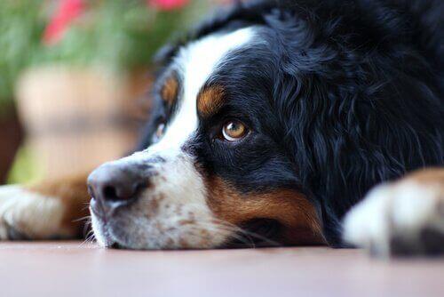 yukarı bakan köpek