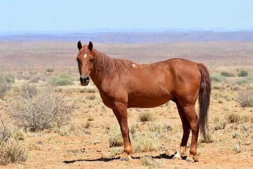 Afrika'nın Atları: Bir Evrimsel Başarı Hikayesi