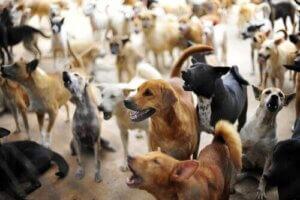 Fazla kalabalık bir pet shop